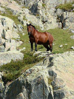 Horse, Rocks, Pyrenees, Wild Nature, Port Of Tavascan
