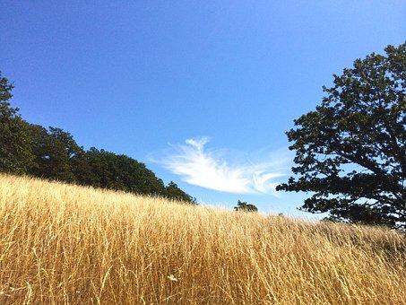 Meadow, Field, Cloud, Grass, Tree, Low, Blue, Sky