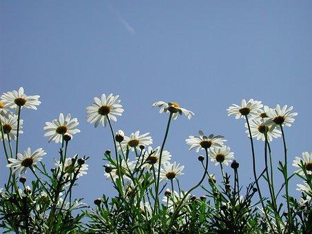 Backlighting, Persepktive, Flower, Magariten, White