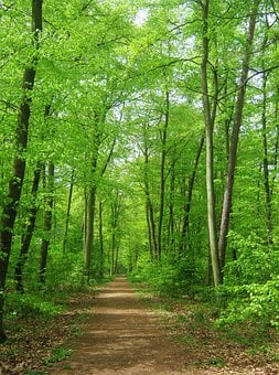 Forest, Nature, Trees, Background, May, Tender, Away