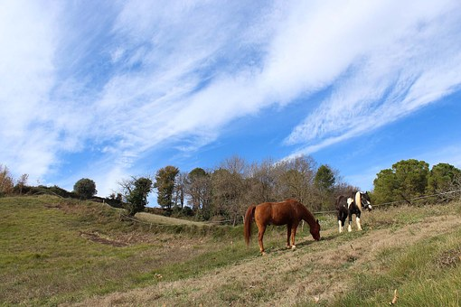 Horses, Animals, Field, Nature, Four Legged, Farm