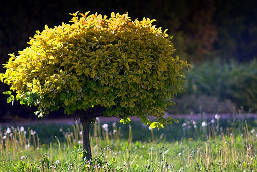 Tree, Green Tree, Green, Writ Large, Nature