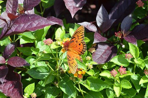 Butterfly, Garden, Spring, Insect, Nature, Wildlife