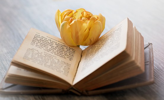 Book, Old Book, Old, Book Pages, Pitched, Font, Blossom