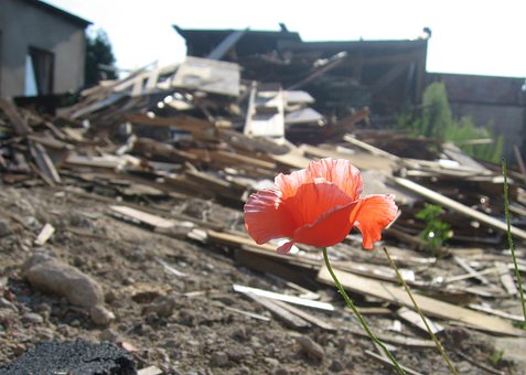 Hope, Poppy, Optimism, Scrap, Wood