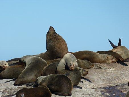 South Africa, Cape Town, Cape, Cape Peninsula, Sea
