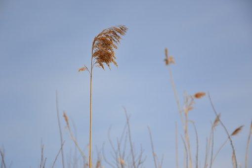 Grass, Dry, Straw, Yellow, The Broom, Winter, Grey