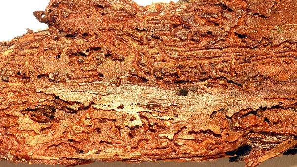 Wood, Bark, Wood Worm, Beetle, Structure, Tree Bark