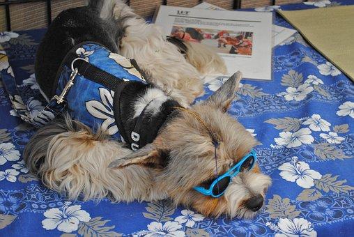 Fashionable Dog, Carlsbad, California, Pet, Animal