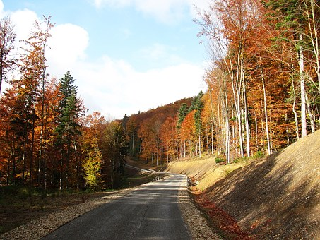 Forest, Landscape, Tree, Nature, Autumn, Konary, Spacer