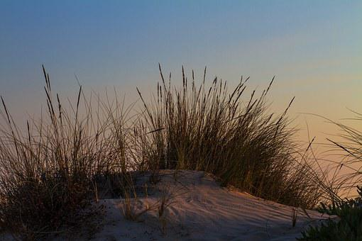 Beach, Holiday, Coast, Sea, Dune, By The Sea