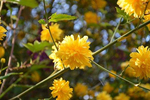 Blossom, Bloom, Yellow, Bush, Bloom, Branch
