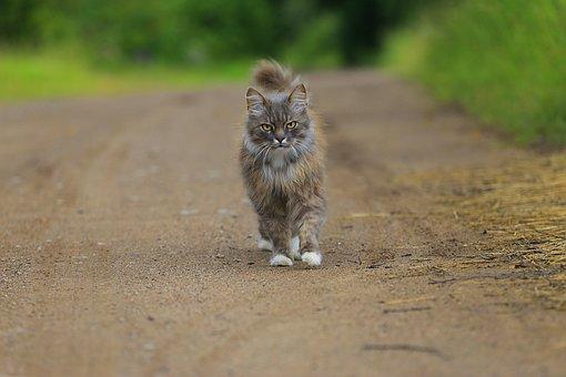 Cat, Handsome Man, Animal, Live Photos, Stroll, Grey