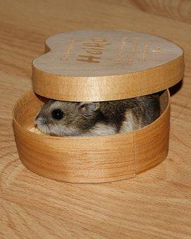 Dwarf Hamster, Animal, Pet, Small, Cute, Sweet