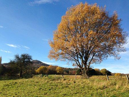 Königswinter Germany, Autumn, Log, Lone Tree