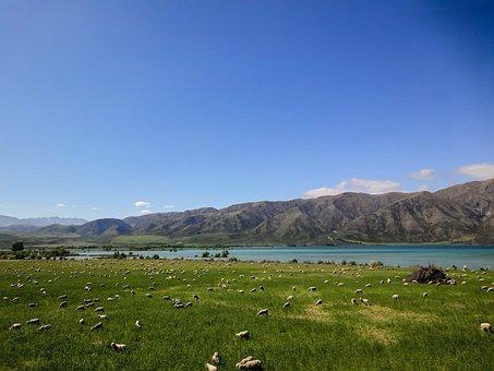 New Zealand, Pasture, Cattle, Mountains, Landscape