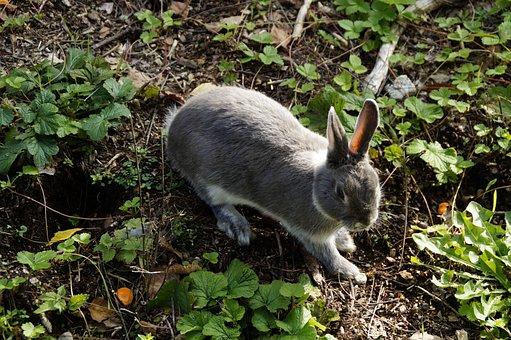 Hare, Bunny, Rabbit, Pet, Dwarf Rabbit, Cute, Meadow