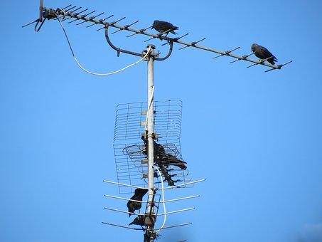 Antenna, Tv Antenna, Reception, Old, Blue, Sky, Birds