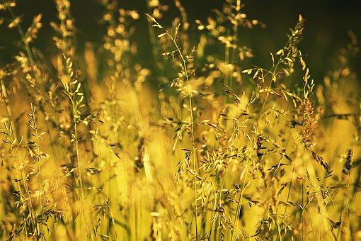 Summer, Heat, Handsomely, Macro, Grass, Sun, Photo