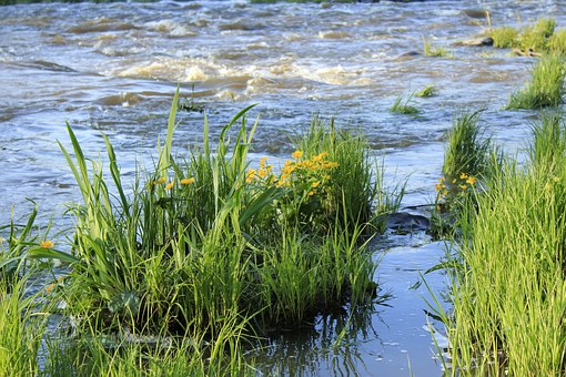 Water, Power, Someone, A Bed Of Reeds, Summer, Nature