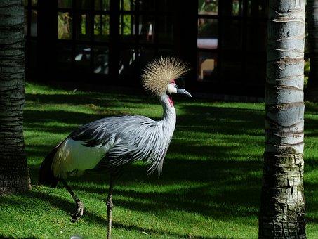 Crane, Bird, Spring Crown