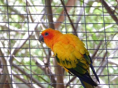 Parrot, Bird, Cage, Parrot In Cage, Fauna, Canary