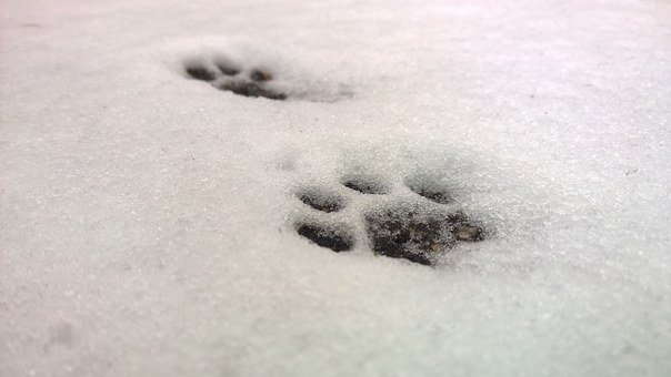 Snow, Cat's Paw, Paws, Cat Track, Paw Prints, Cat
