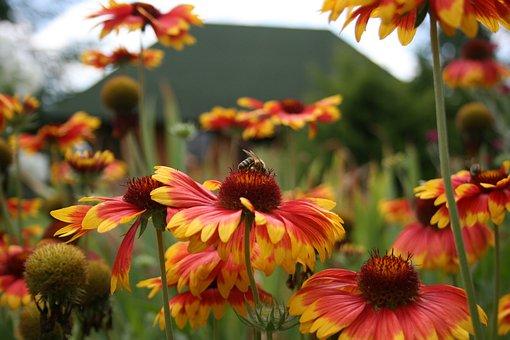 Osa, Bee, Insects, Flower, Garden, Summer, Grass, Macro