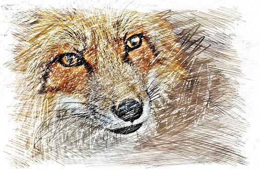 Fuchs, Drawing, Colorful, Wildpark Poing, Animal