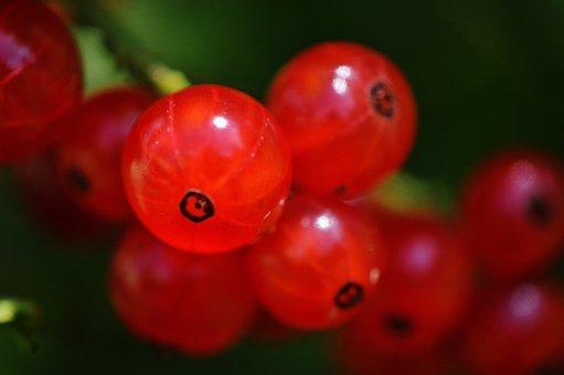 Currants, Fruit, Berries, Fruits, Red Currant, Garden
