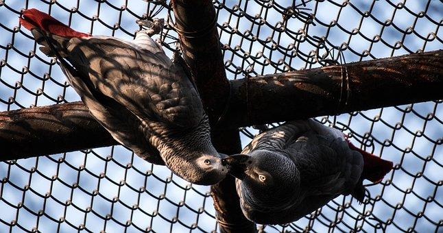 Bird, Kiss, Cage Bird, Zoo, Love, Animal, Kissing