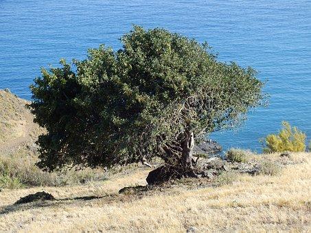 Olive, Nature, Olives, Tree, Mount