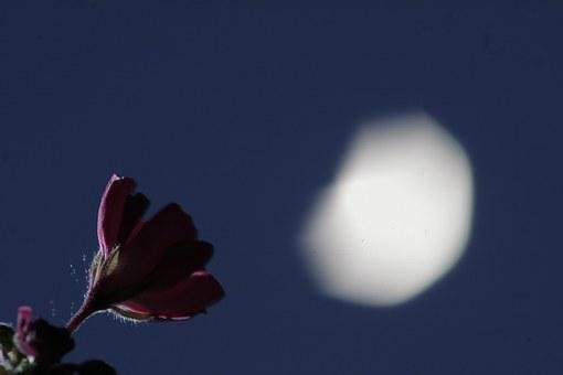 Night, Moon, Star, Flower, Red, Sky, Night Sky, Light