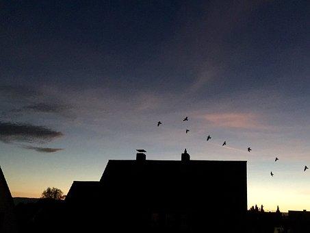 Evening Sky, Homes, Birds, Bird Flight, Chimney, Roofs