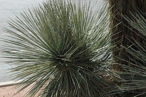 Sedona, Arizona, Western, Southwestern, Sage, Grasses