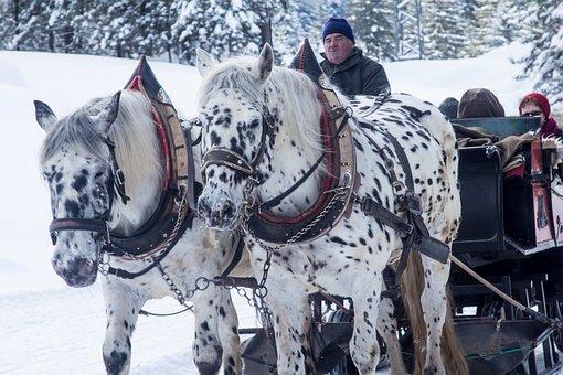 Winter, Slide, Horses, Sleigh, Sleigh Ride