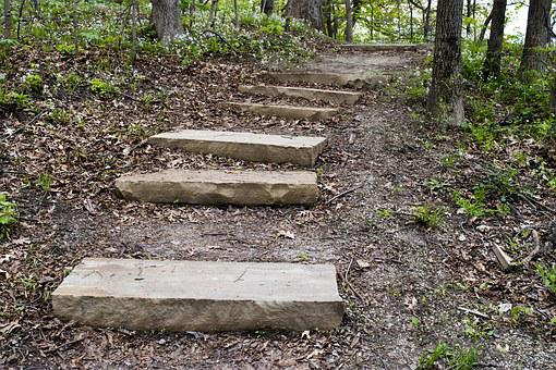 Woods, Steps, Forest, Green, Park, Outdoors, Path