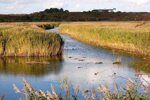 Wetlands, Westleton, Suffolk, Water, Reed Beds