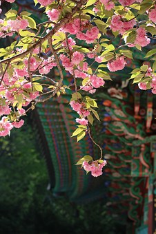 Section, Pink, Flowers, Temple, Entrance, Moon