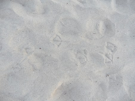 Trace, Traces, Seagull Trail, Seagull, Footprint
