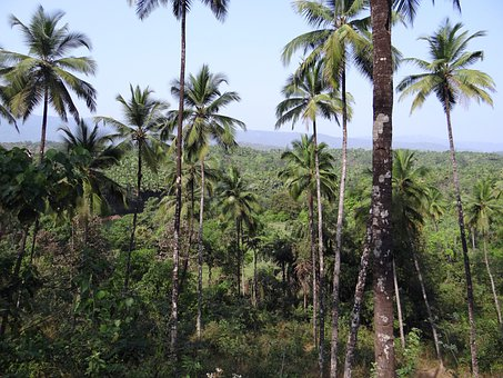 Forests, Coconut Groves, Western Ghats, Mountains