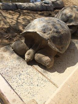 Turtle, Big, Shell, Animal, Nature, Reptile, Wildlife