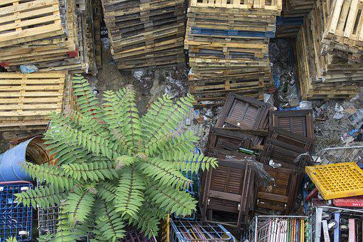 Garbage, Waste, Wood, Plant, Abstract, Mess