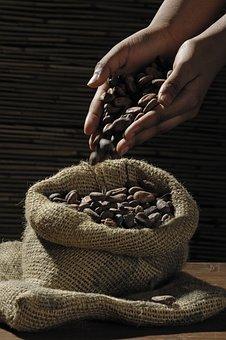 Cocoa Beans, Cocoa, Cacao, Chocolate, Jute