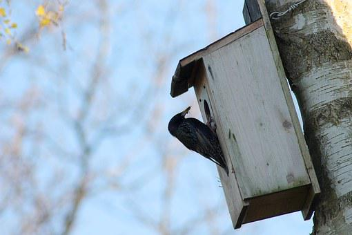 Cataracts, Garden Birds, Nesting Box, Cubs, Food, Have