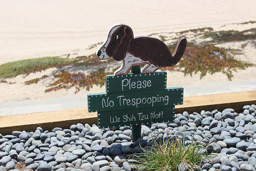 Dog, Poop, Nature, Animal, Doggo, Sign, Canine, Dirty