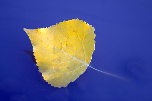 Leaf, Feather, Yellow, Water, Sunk, Floats, Autumn