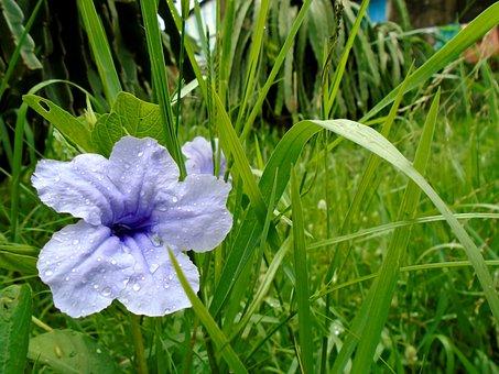Flower, Leaf, Natural, Fresh, Nice, Blooming, Scenery