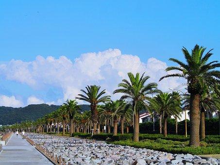 Palm Trees, Tree Lined, Blue Sky, White, Cloud, Green