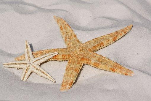 Starfish, Sand, Beach, Sea, Water, Sun, Lake, Bodnar